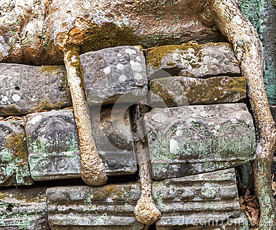 banyan-tree-rock-ruin-ta-prohm-cambodia-roots-stone-wall-part-khmer-temple-complex-asia-siem-reap-ancient-khmer-architecture-57350372