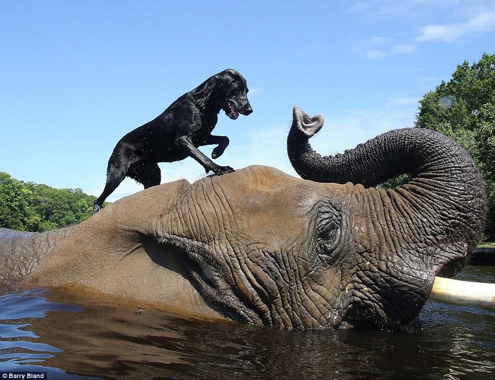 130917-dog-elephant1