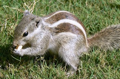 468195506_c755ebbf28_squirrel