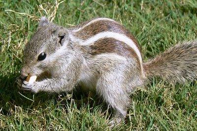 468195506_c755ebbf28_squirrel