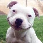 Laugh-4