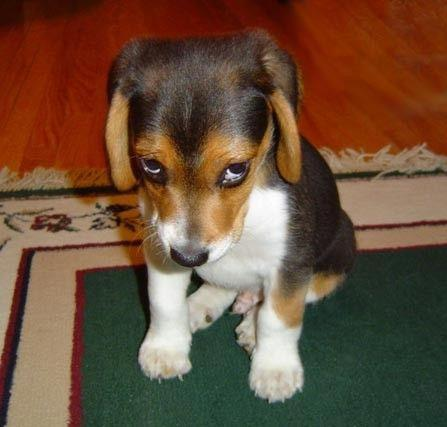 sorry-cute-dog