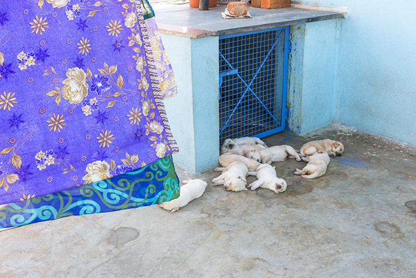 11 puppies